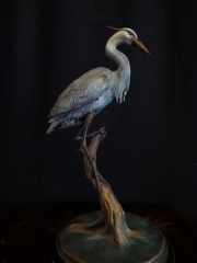 """""""Blue Heron""""  14 1/2""""  x  7""""  Limited Edition 50   """"Blue Heron"""" - Birds  Bronze Sculpture of Birds and Fish"""