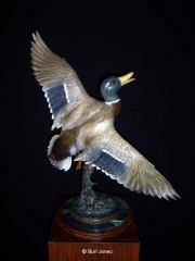 """""""Off The Pond""""  Drake Mallard<br>Life Size  -  Edition 50 """"Off The Pond"""" - Birds  Bronze Sculpture of Birds and Fish"""