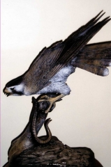 """""""Serpendine""""<br>Praire Falcon with or without snake<br>Life Size - Edition of 50 """"Serpendine"""" - Birds  Bronze Sculpture of Birds and Fish"""