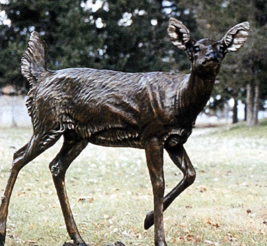 """Whitetail Deer"" <br>Lifesize - Edition of 50 ""Whitetail Deer""  Whitetail Deer Sculpture"