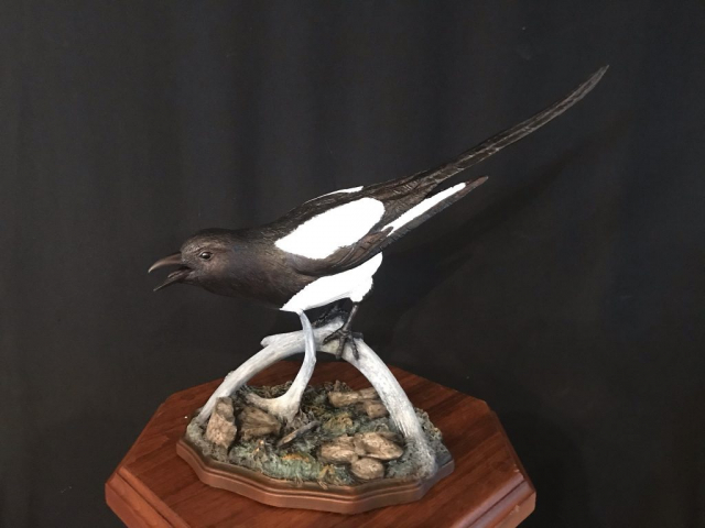"""""""Magpie"""" edition 20 """" long 16 """" tall Edition10"""